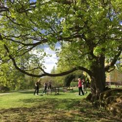 Spiraalistabilaatio puistossa